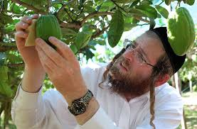 etrog for sale why some jews are paying 500 for an italian etrog