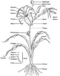 Human Anatomy Worksheet Plant Anatomy Worksheet Tags Plant Anatomy Quiz And Worksheet