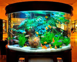 686 best aquarium ideas and design images on aquarium