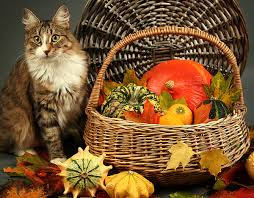 photo collection thanksgiving cat