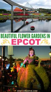 how to grow beautiful flowers oh my creative