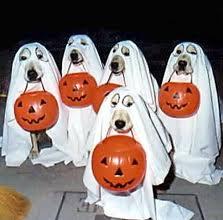 Pet Halloween Costumes Dogs Diy Dog Halloween Costumes Todaysmama