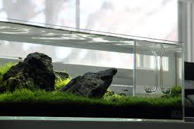 Ada Aquascaping The Official Ada Gentlemen Ladies Club The Planted Tank Forum