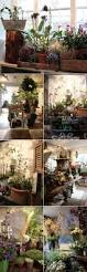 Flower Shops by 344 Best Love A Good Flower Shop Images On Pinterest Flower