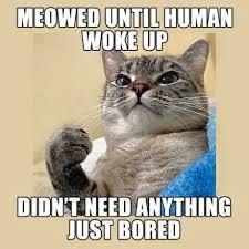 Success Cat Meme - success cat