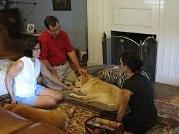 dog euthanasia of veterinary hospice does euthanasia hurt my dog or cat