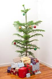 exquisite decoration small real christmas trees feel nordic spruce