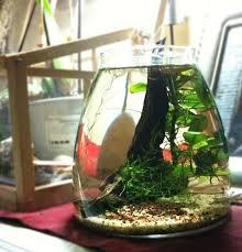 ikea vasi vetro trasparente caridine cherry in un vaso ikea