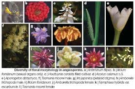 Viroid Diseases In Plants - physiology of plantae botany