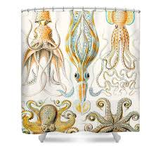 Zoological Shower Curtain Haeckel Shower Curtains Fine Art America