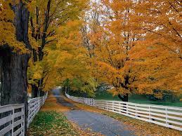 autumn nature wallpaper desktop wallpaper
