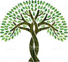 tree symbol entwined tree symbol illustration stock vector art more images