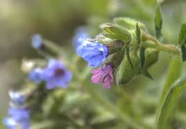 native african plants 12 beautiful blue flowering plants for the garden