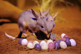 easter traditions in australia 2015 celebration guide
