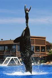 i trained killer whales at seaworld for 12 years here u0027s why i