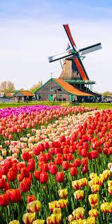 flower garden in amsterdam keukenhof gardens near lisse netherlands http en directrooms
