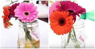 cut flowers what s the best way to keep flowers fresh the