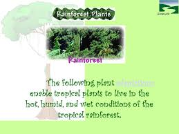 Adaptations Of Tropical Rainforest Plants - plants and animals of the tropical rainforests ppt video online