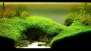 Mountain Aquascape Example No 21553 From The Category Aquascaping