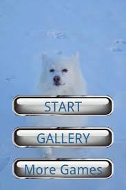american eskimo dog japanese spitz difference dog puzzle american eskimo do android apps on google play