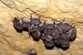 bat facts for kids bats diet and habitat