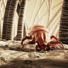 acari materasso rimedi la strategia giusta per combattere l allergia agli acari la