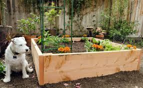 4x4 raised vegetable garden design with soil mix and trellis plus