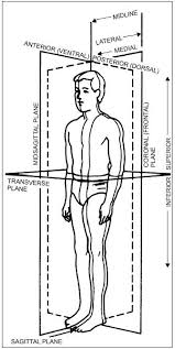 Picture Of Anatomical Position Chapter 1 Anatomy And Physiology