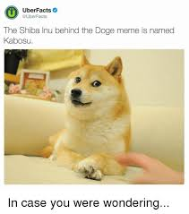 What Is Doge Meme - uberfacts facts the shiba inu behind the doge meme is named kabosu