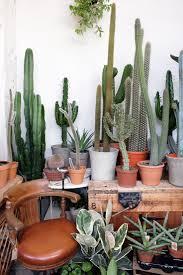 cactus garden ideas rental house and basement ideas