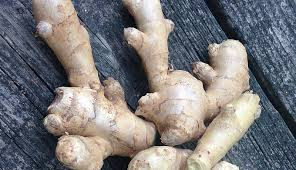 Is Ginger Root A Vegetable - plant ginger in late winter hobby farms