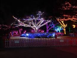 another fab lighted tree picture of houston zoo houston