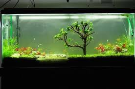 Aquascape Fish Natural Aquascape Moss Tree Handmad End 10 1 2018 4 15 Pm