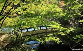 japanese zen garden decorating clear