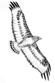 birds art artthatinspirestomakeart bird tattoo