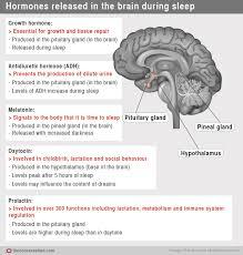 here u0027s how our hormones help get us to sleep sciencealert