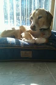 Ll Bean Dog Bed 117 Best L L Bean Everywhere Images On Pinterest Maine Bean