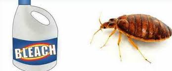 Bed Bugs In Mattress Does Bleach Kill Bed Bugs Eggs Larvae Clorox To Get Rid Of