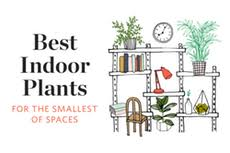 Best Fragrant Indoor Plants - 5 fragrant plants for a small space apartment therapy
