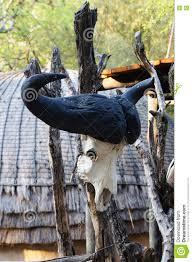 La Maison Du Sud Crâne De Buffle De Cap à La Maison Tribale De Paille Afrique Du