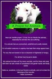 pet prayer a prayer for animals albert schweitzer petcorps professional
