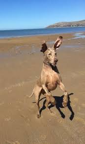 191 best Delightful dog photos images on Pinterest