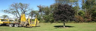 tree transplanting illinois big tree sales illinois tree care