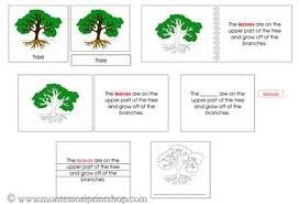 montessori tree printable tree definition nomenclature set printable montessori nomenclature