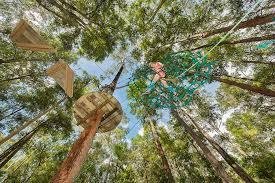 treetop adventure park treetops sydney central coast