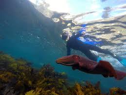 eco activities in sydney sydney sydney snorkeling tours ecotreasures