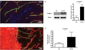 synchronization of endothelial dll4 notch dynamics switch blood