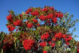 Define Tree Public Hearing Protected Tree Code Amendment Canoga Park