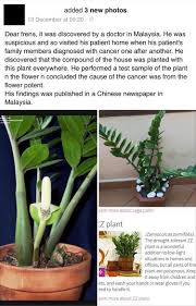 No Light Plants Welcome Plant Causes Cancer Welcome Diy Home Plans Database