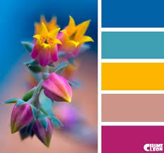 best 25 color fuchsia ideas on pinterest pink color pink
